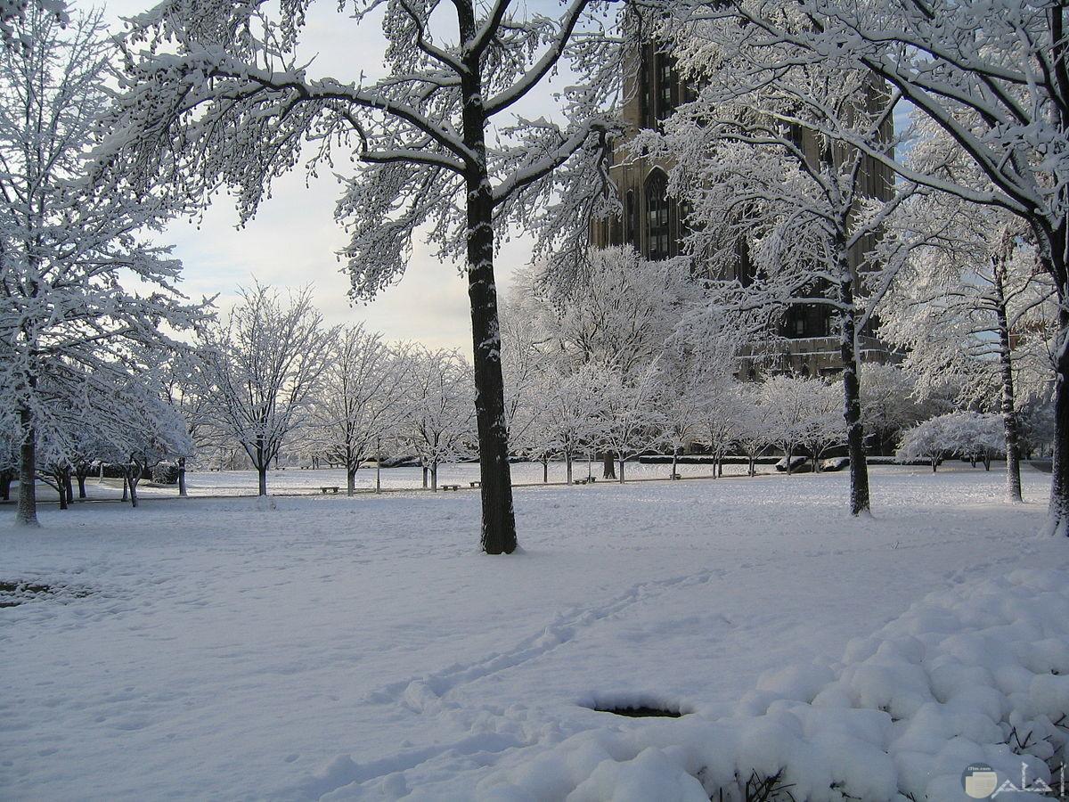 ثلج الشتاء يكسو الاشجار.