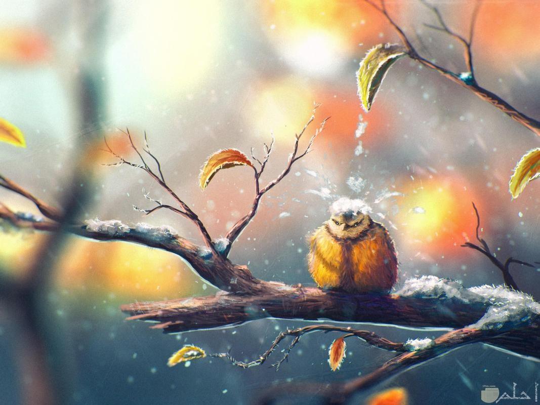 عصفور يقف على غصن وقت الثليج.