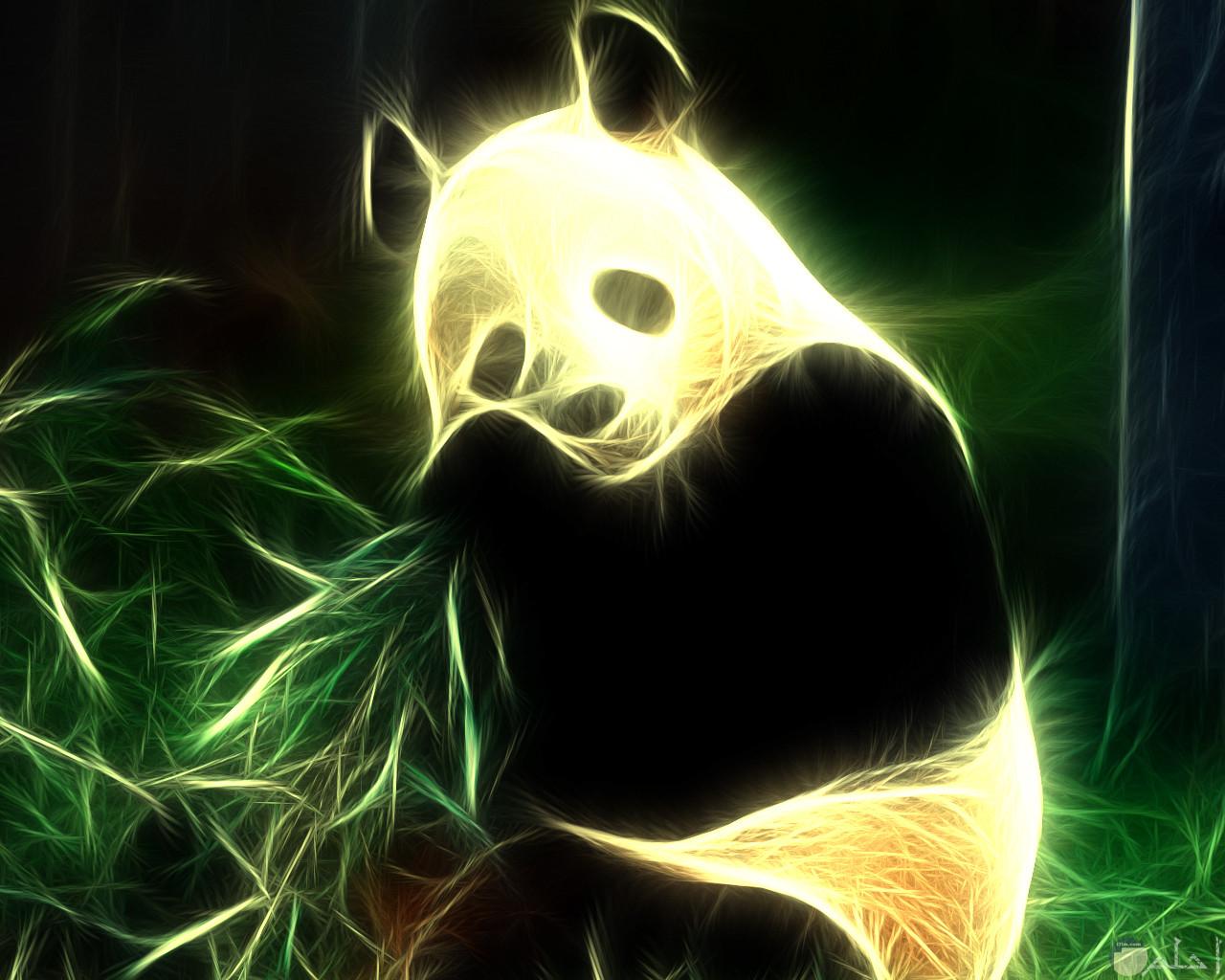 الباندا و عشق الهدوء.