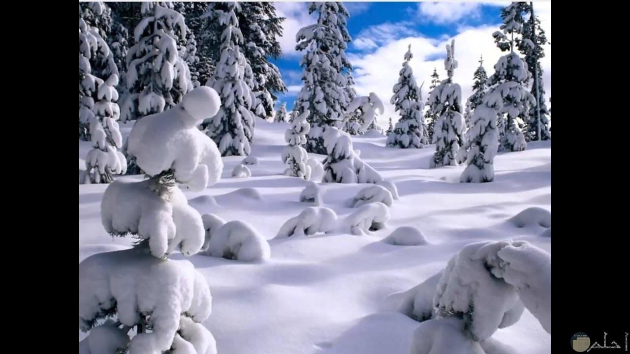 حينما ترتسم الاشجار بالثلج.