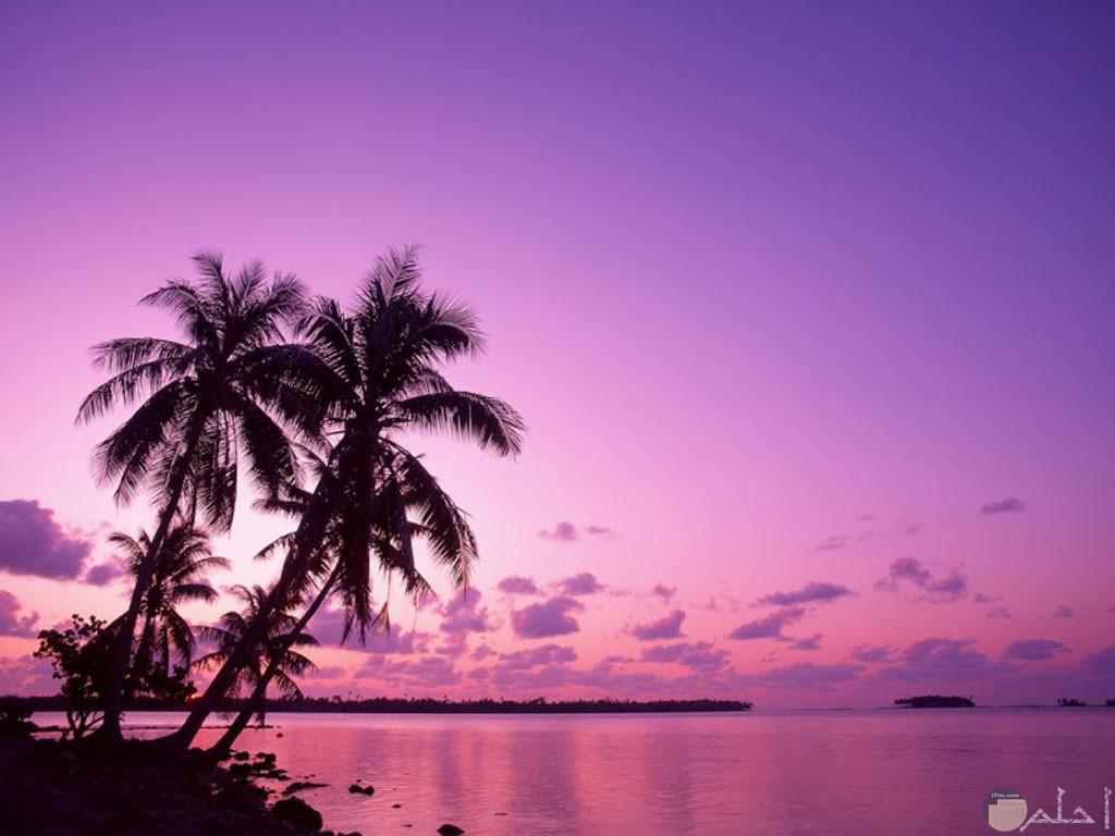 الطبيعة البنفسجية لعشاق اللون البنفسجي.