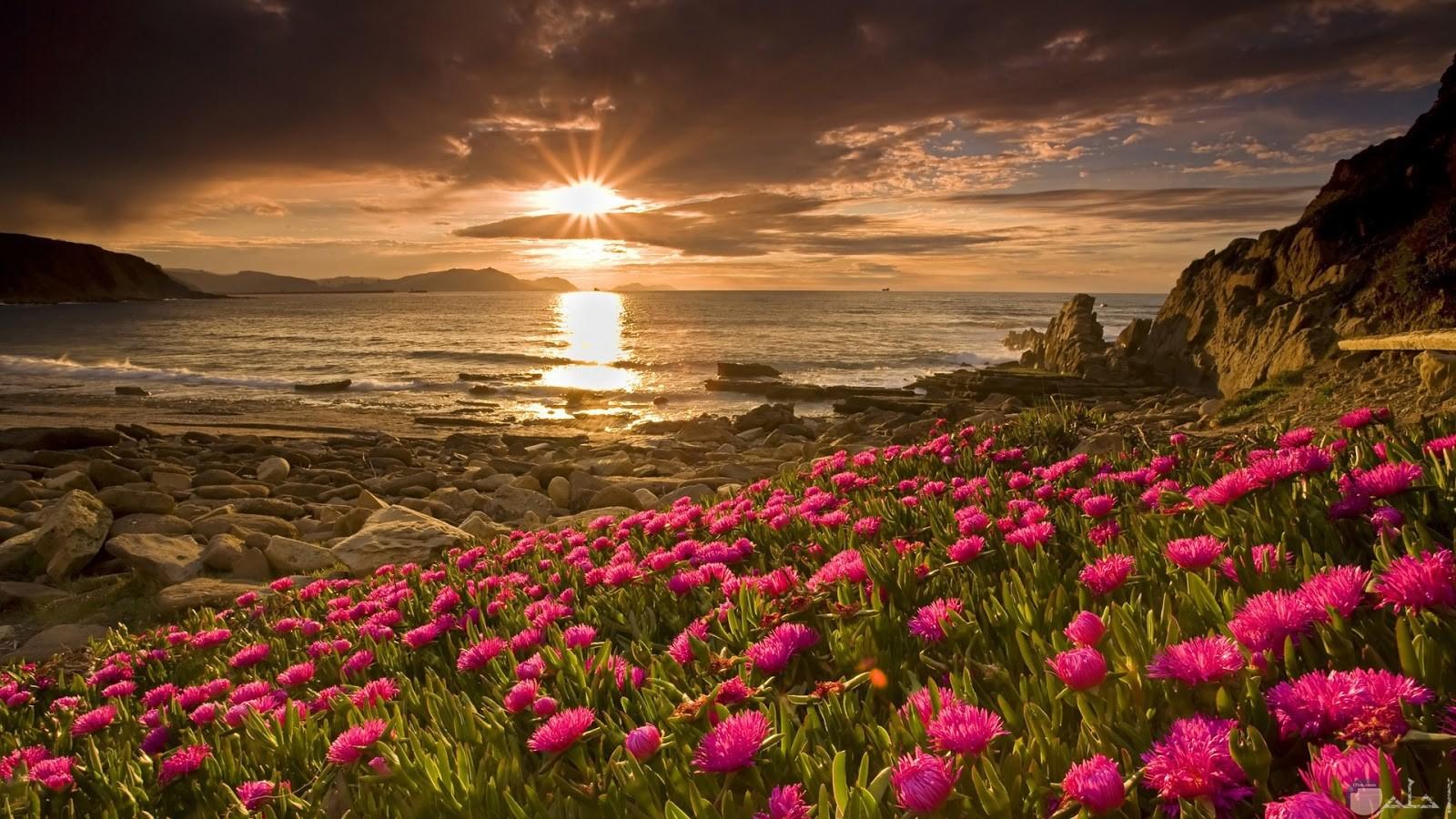 شروق الشمس يروى الزهر.