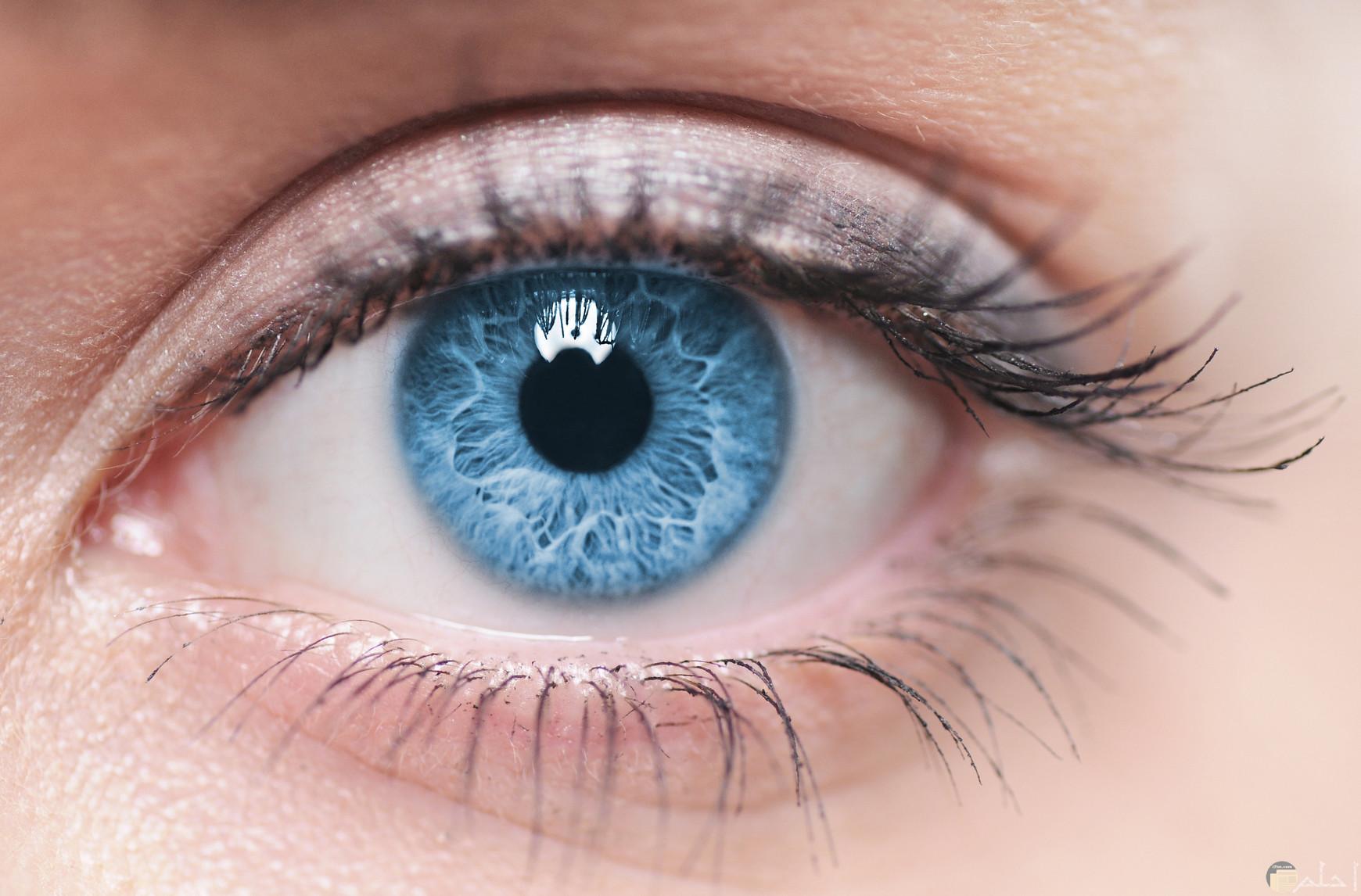العيون الزرقاء الساحرة.