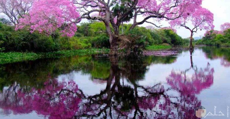احلي اشجار ملونة