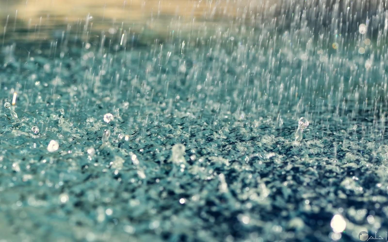 الشتاء و تساقط المطر.