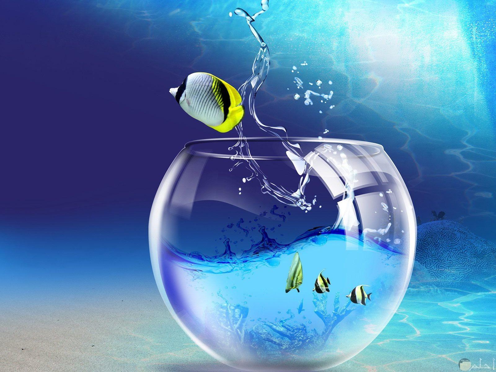 السمك و كأس الماء و روعة الفوتوشوب.