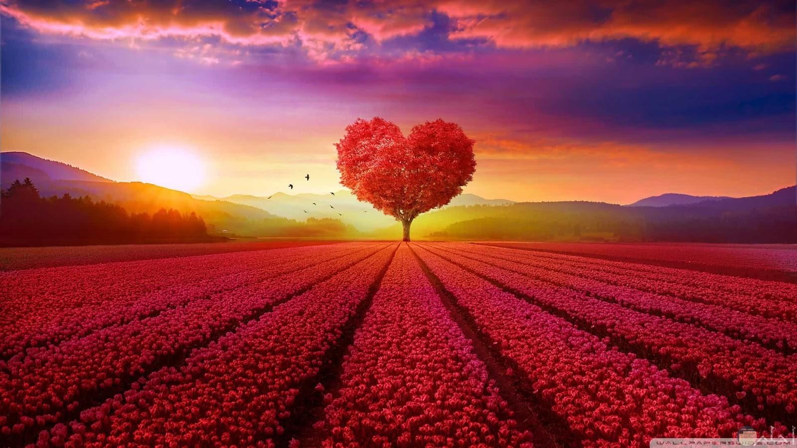 زهور حمراء كثيرة مرتبة وشجرة حمراء علي شكل قلب