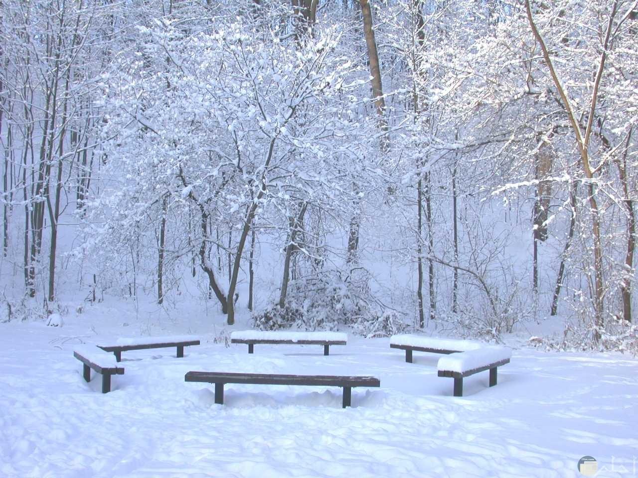 ثلج الشتاء.