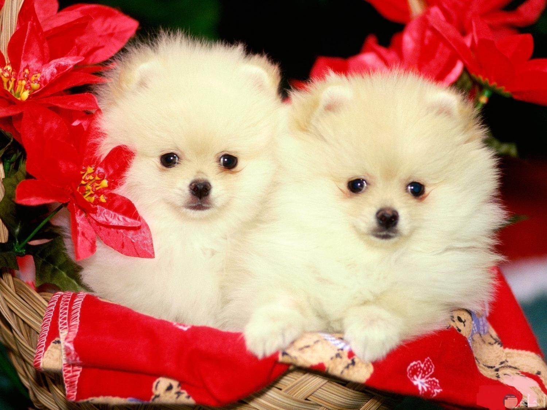 كلبين صغيرين فى عرس.