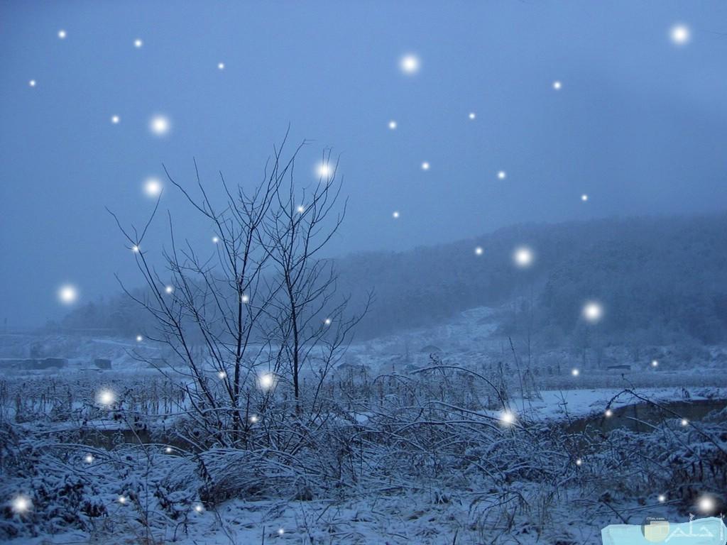 الشتاء و قطرات الثلج.