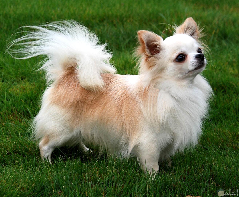 كلب صغير ينتظر اللعب.