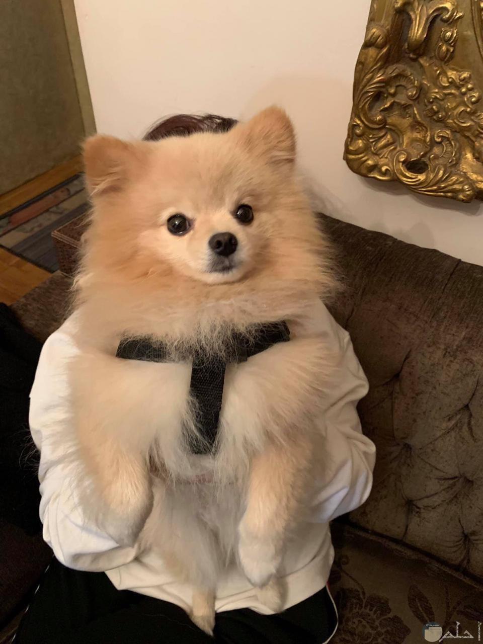 كلب صغير و الهدايا.