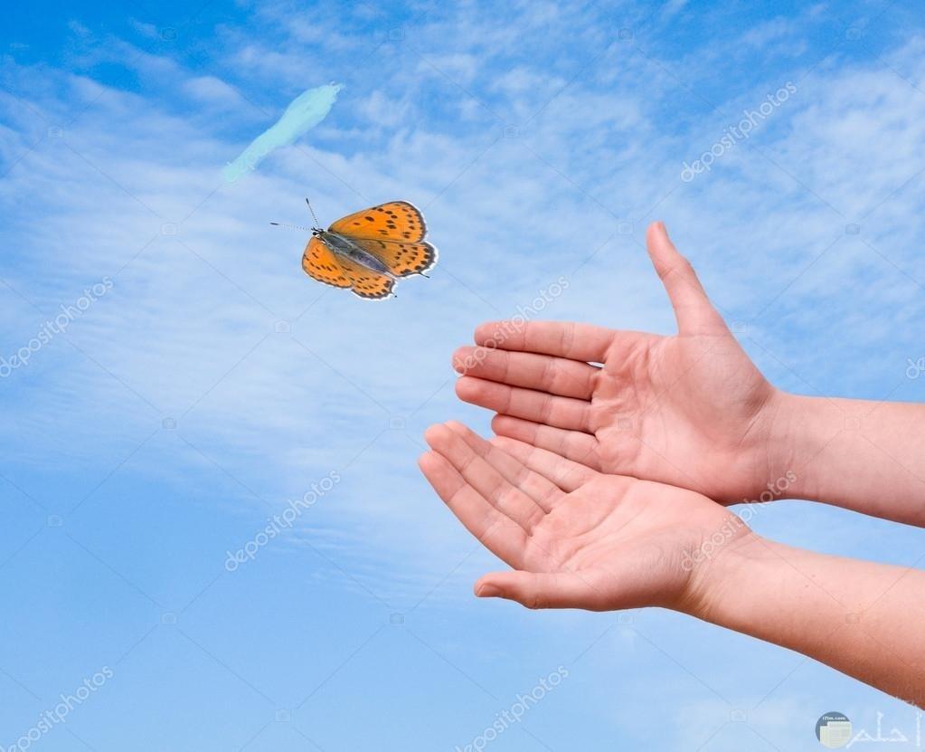 الحرية و الفراشات الجميلة.