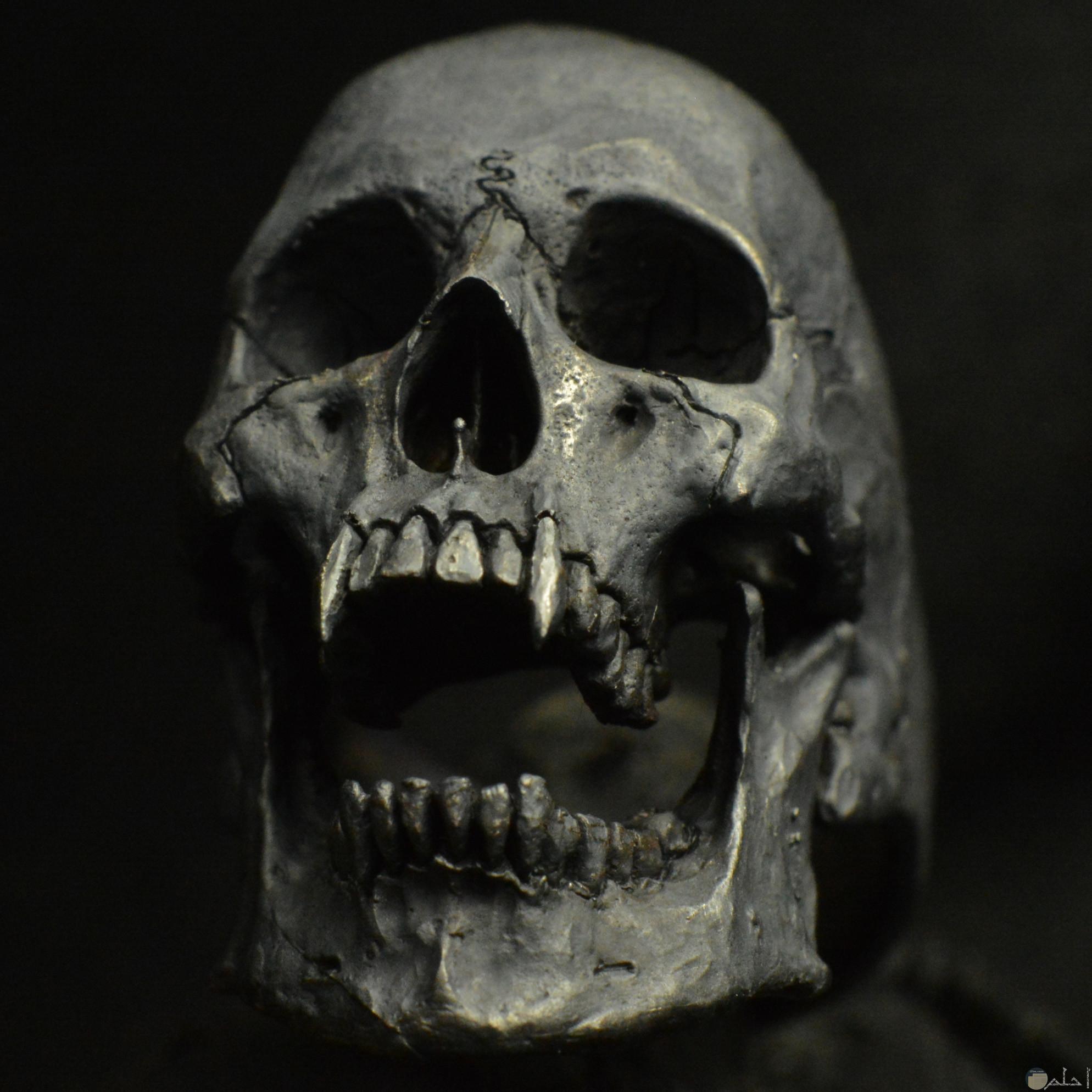جمجمة مصاص للدماء.