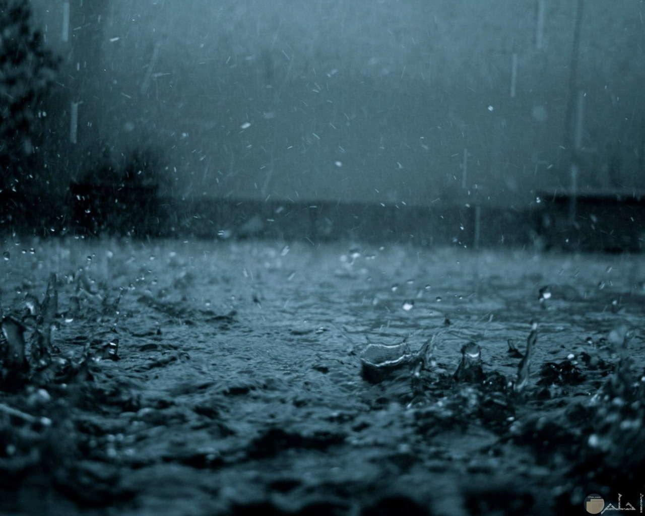 رخات المطر.