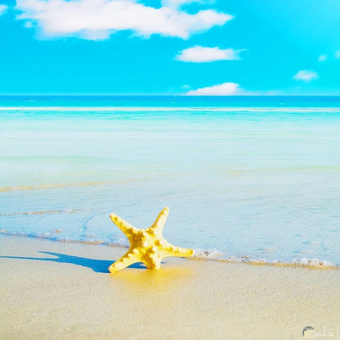 هدوء و جمال الشاطئ.
