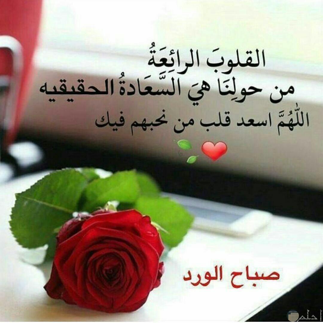 صباح الورد مع كلام جميل.