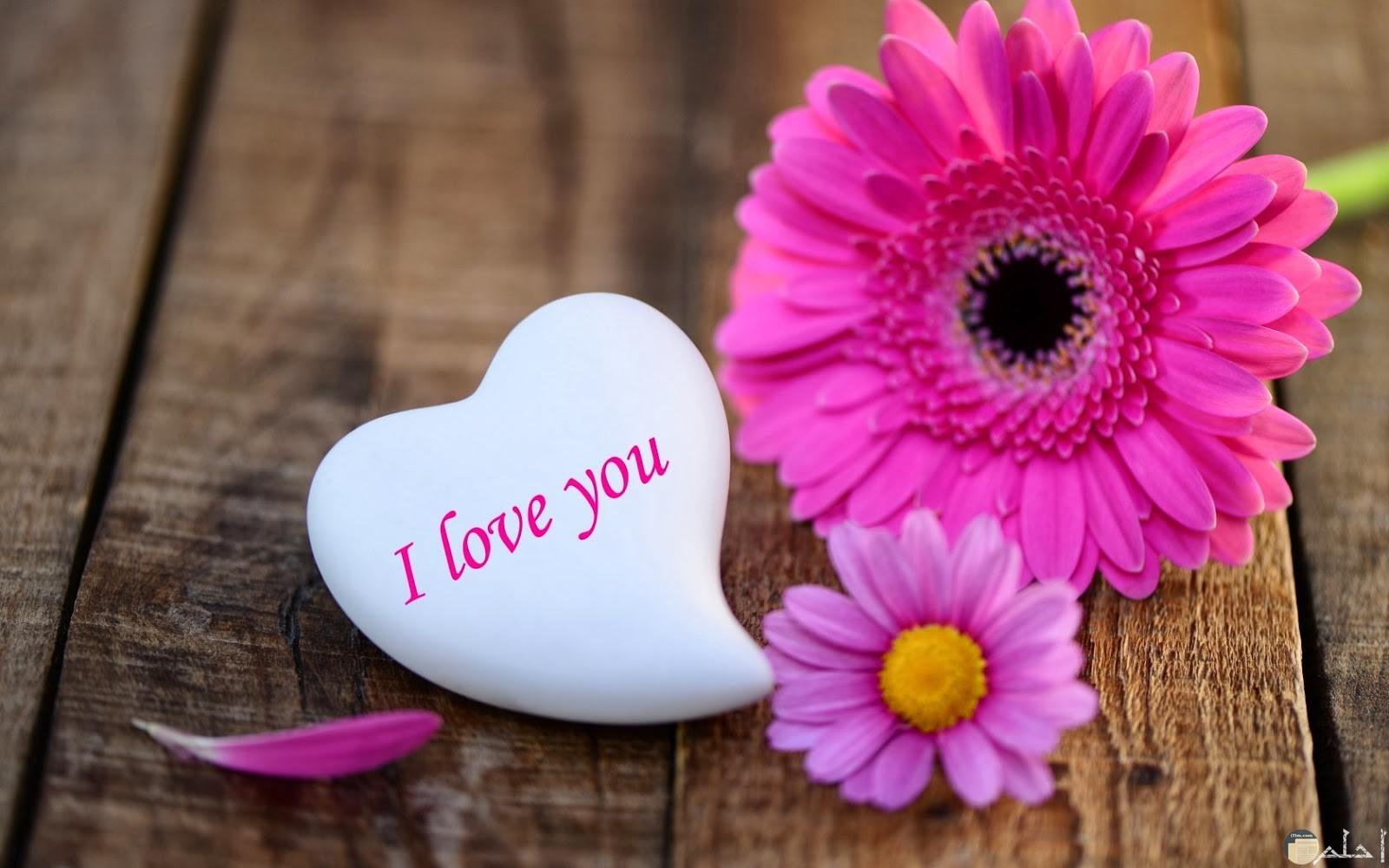 قلب مكتوب عليه احبك بالانجليزية مع ورد بينك و موف رقيق جداً.