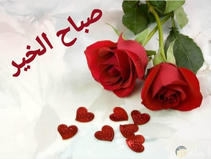صباح الخير مع زهور حمراء