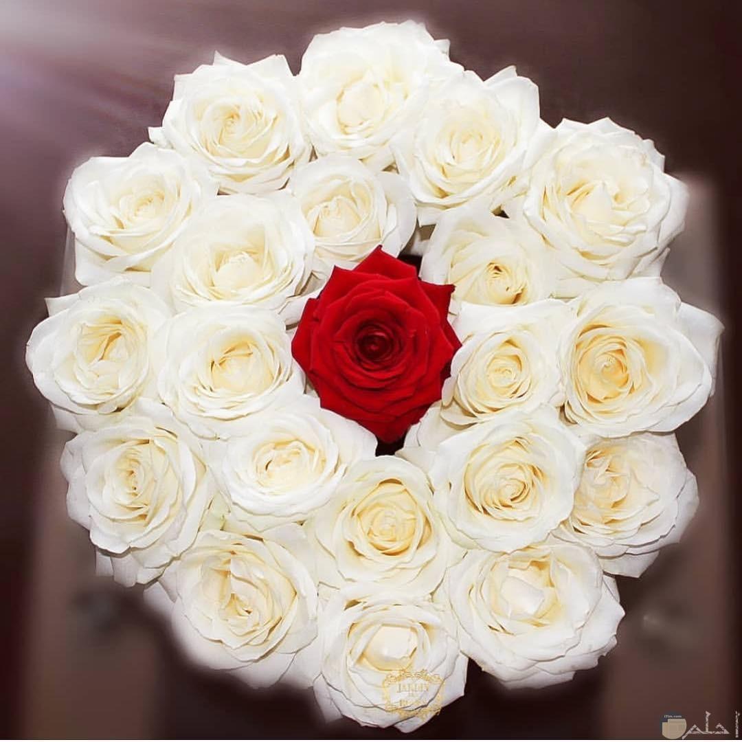 بوكيه ورد أبيض لليلة الزفاف.