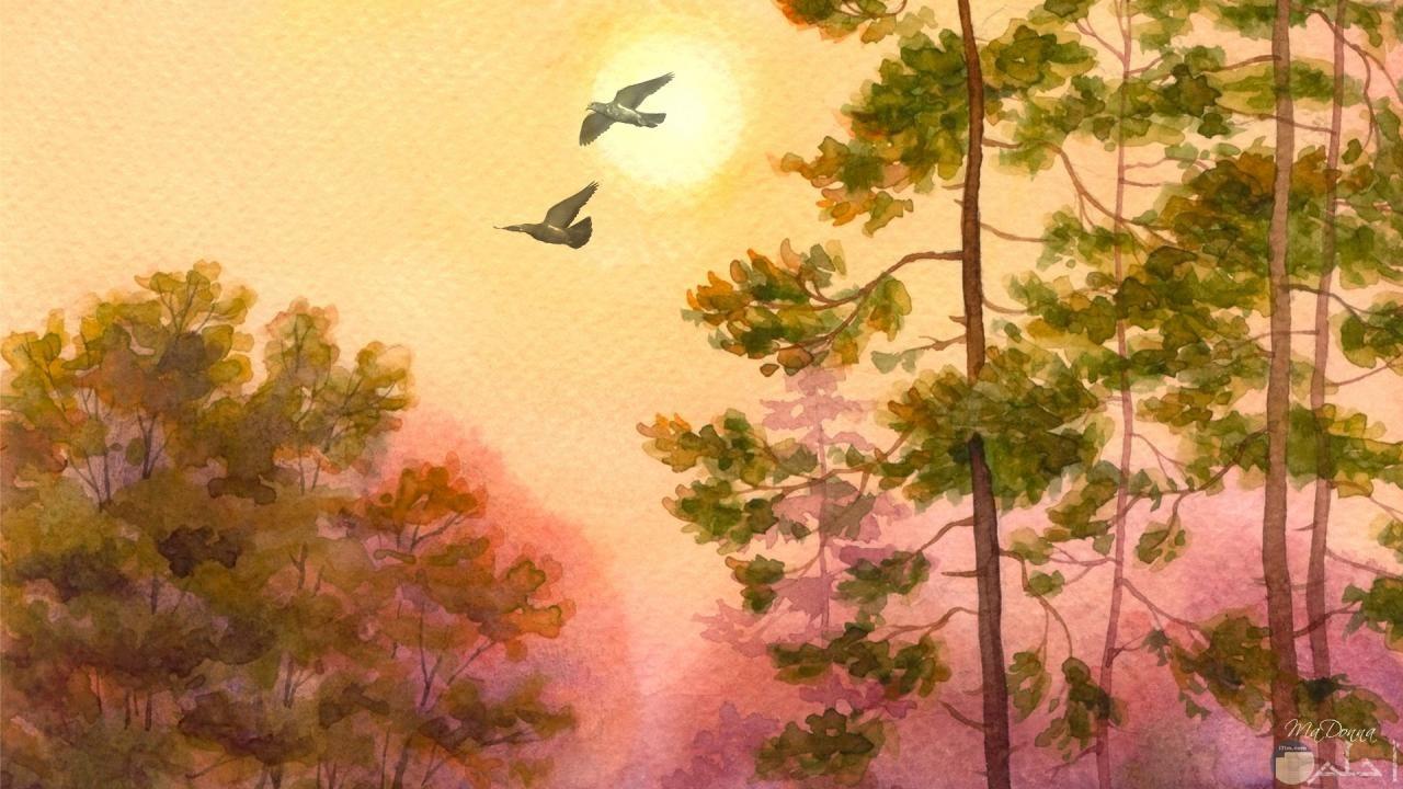 طيور واشجار مرسومة بطريقة جميلة