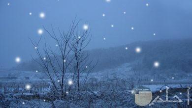 ثلج فصل الشتاء مثل حبات اللؤلؤ.