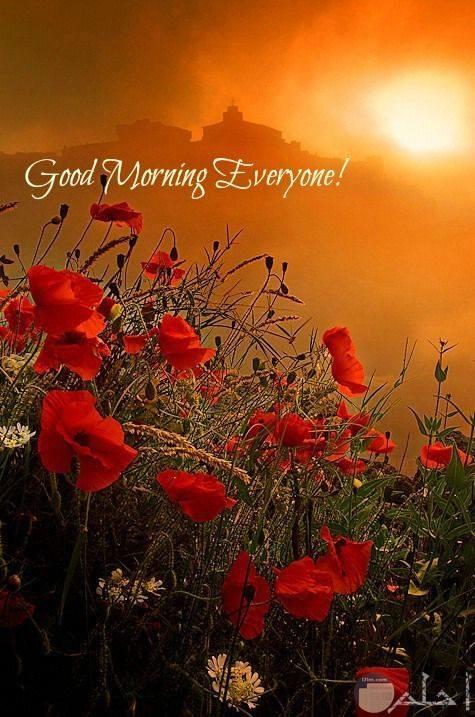 صباح الخير على الجميع