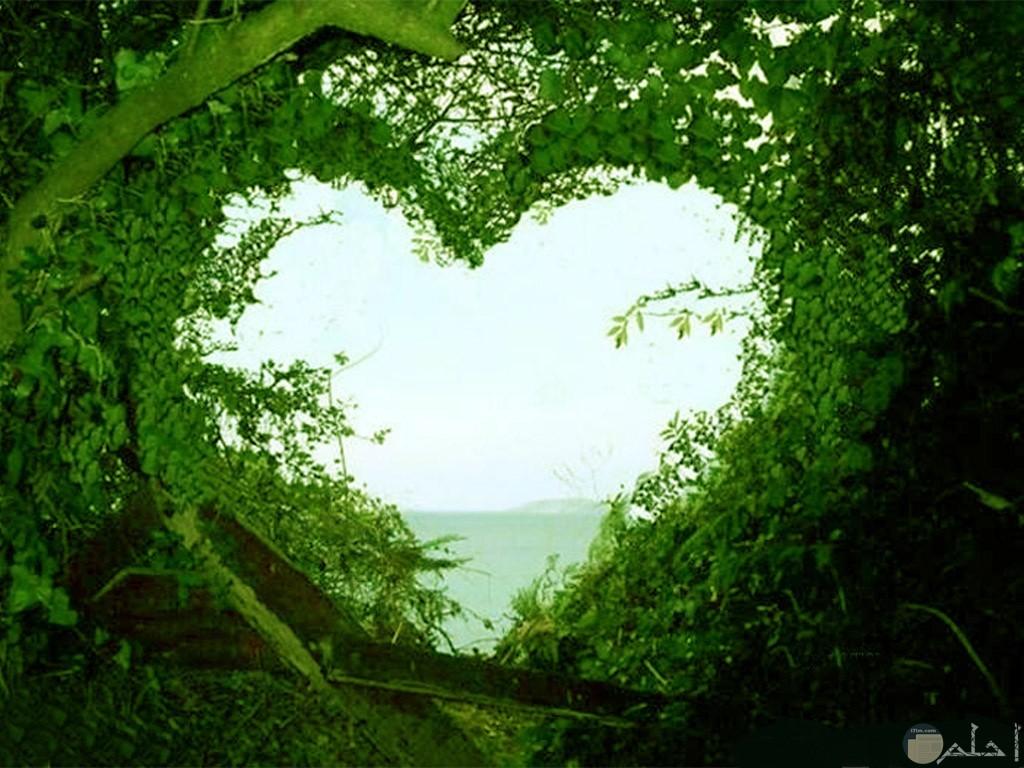 قلب من أغصان الشجر الأخضر.