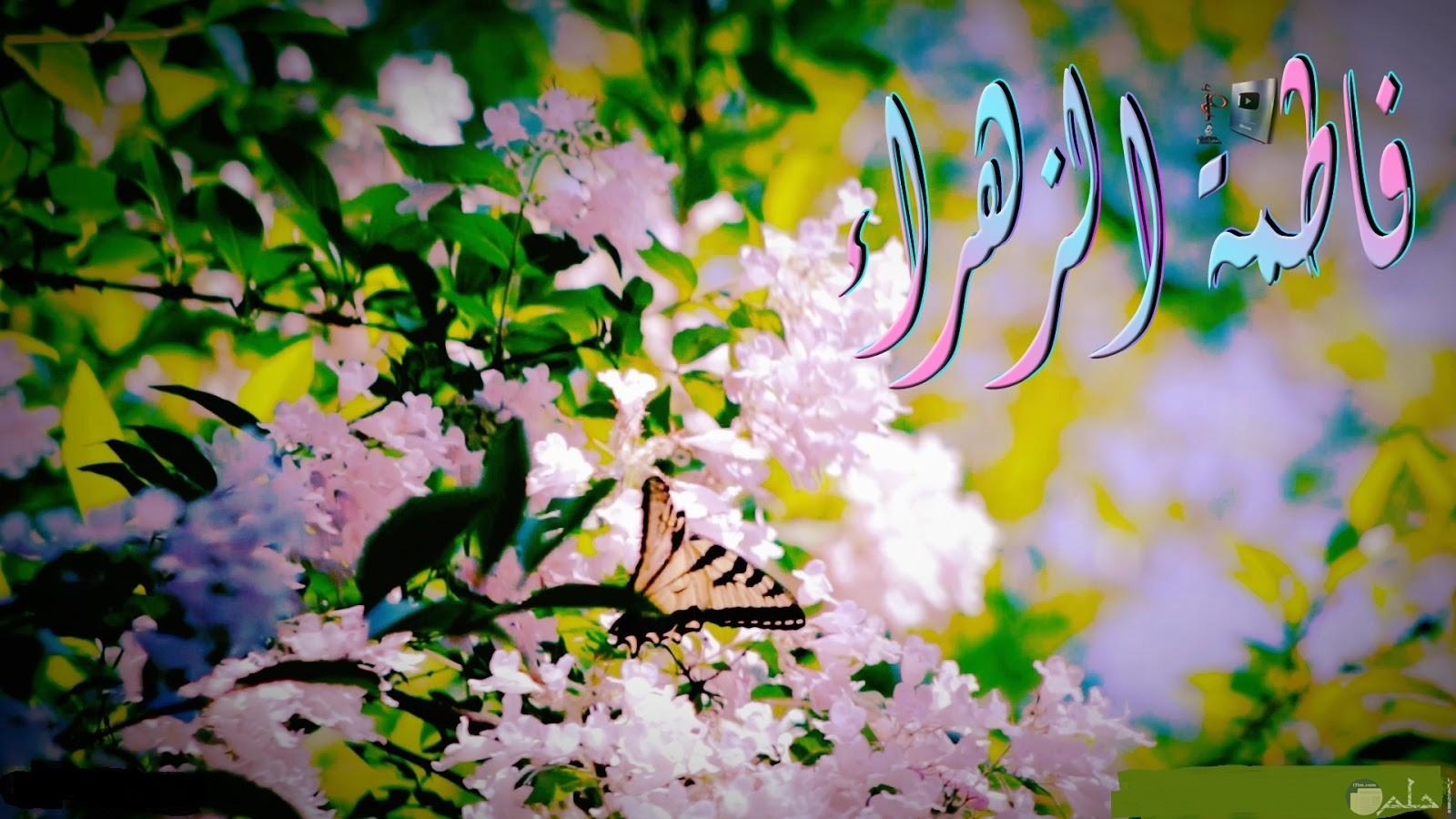 الزهور تتزين بإسم فاطمة الزهراء