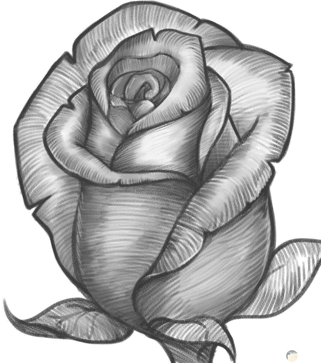 رسم الورد بالفحم.