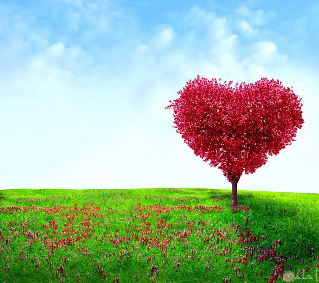 شجرة على شكل قلب أحمر.