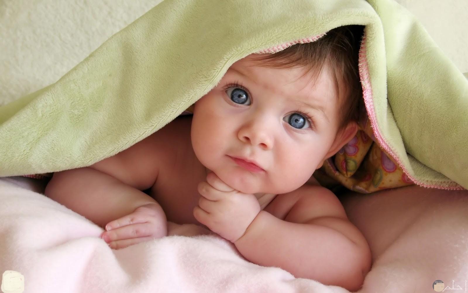 صورة جميلة لطفل يداعبنا.