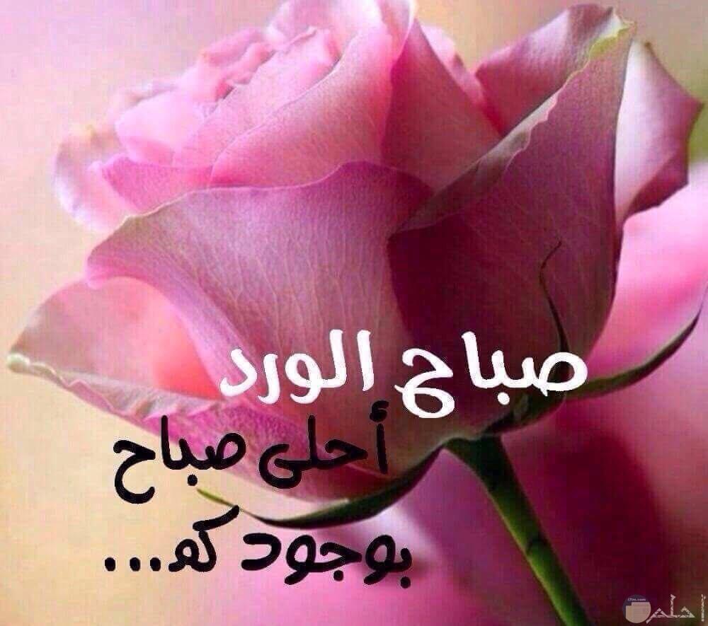 صباح الخير و الورد.
