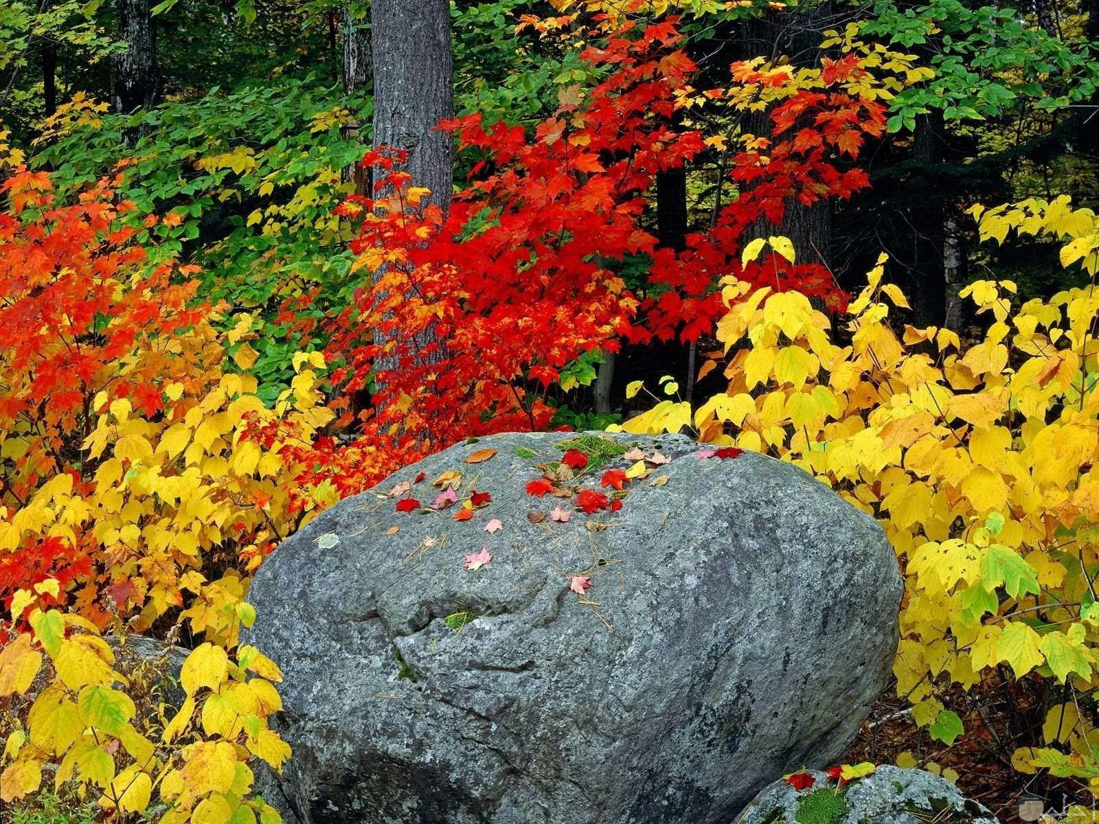 سبحان جمال الخلاق اشجار ملونه جميلة
