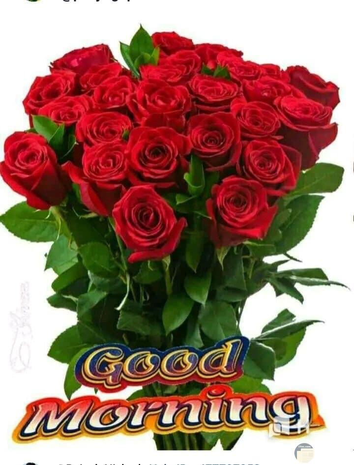 صباح الخير وزهور حمراء