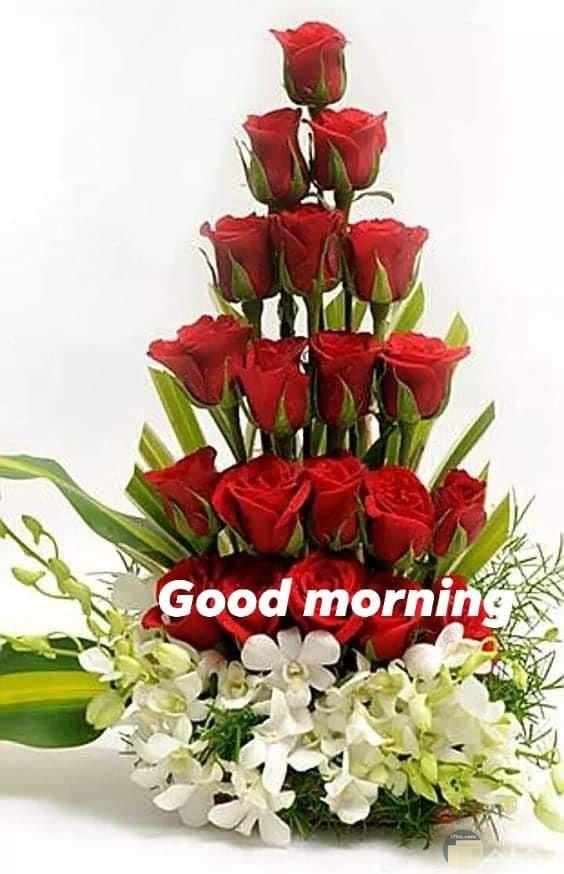 زهور باللون الاحمر مع صباح الخير