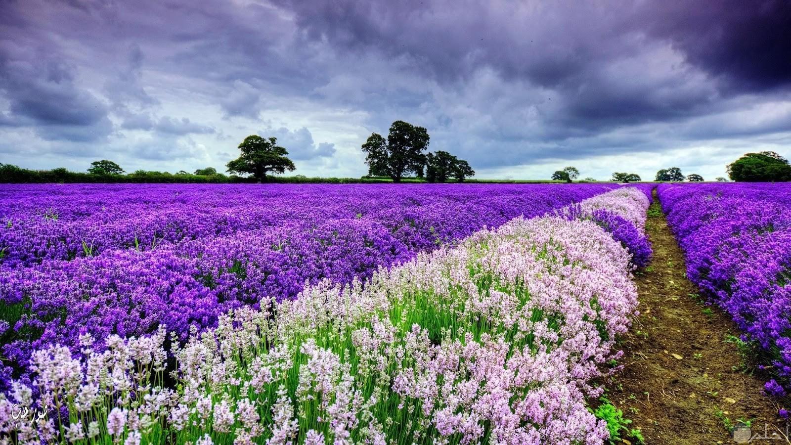 ارض مزروعه بنباتات ملونه ومميزة جميلة جدا