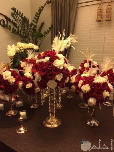 زهور حمراء وبيضاء للمناسبات