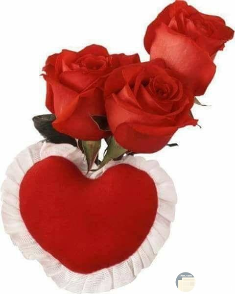 قلب وورد باللون الأحمر