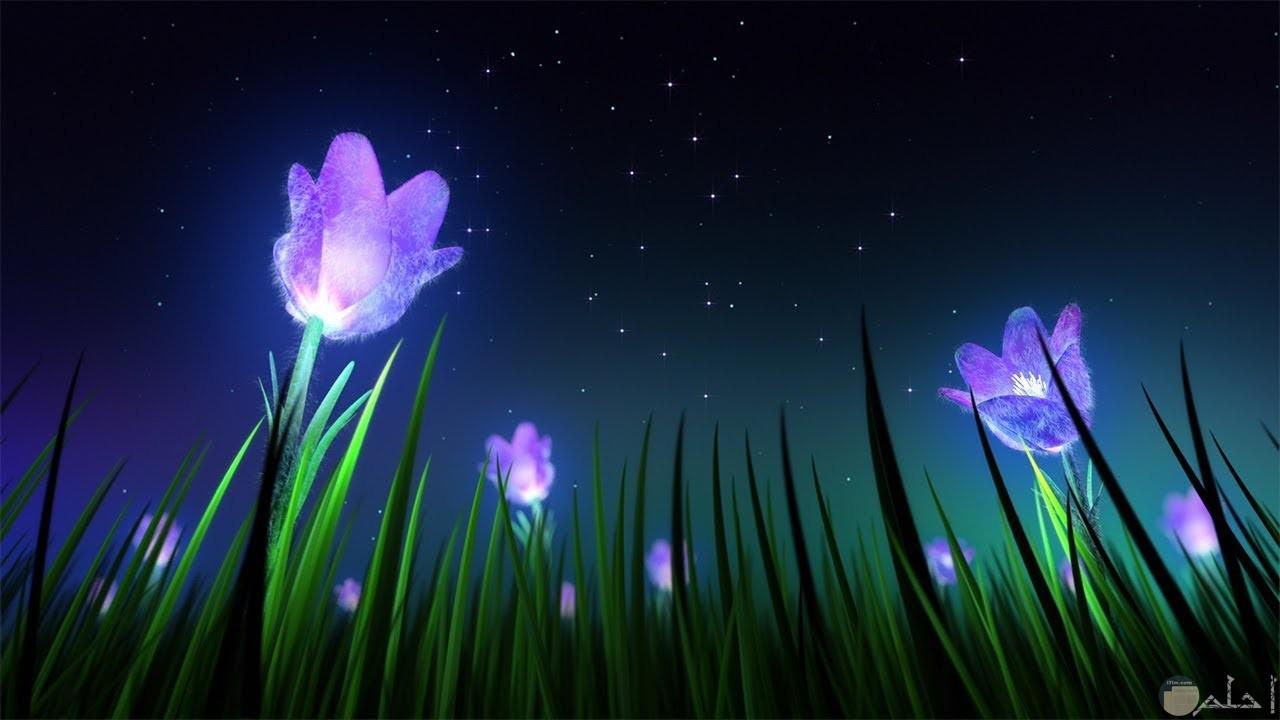 زهور بنفسجي تتألق في الليل.