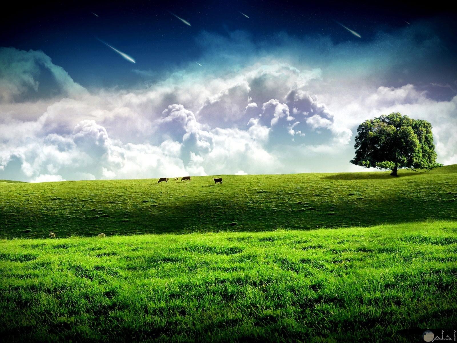 الطبيعة و الريف الأوروبي.
