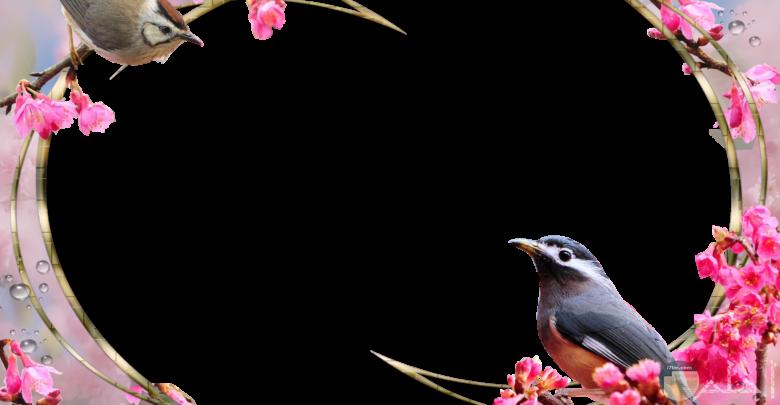 اطار صورة مزين بالعصافير و الورد و بخلفية شفافة.