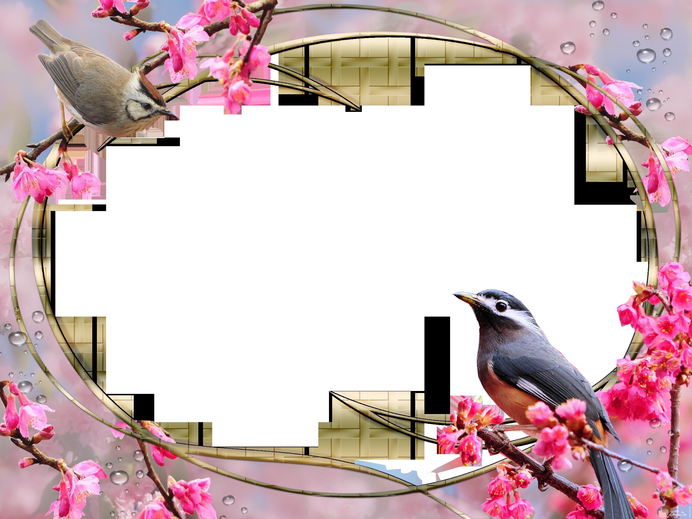 اطار صورة مزين بالعصافير و الورد.