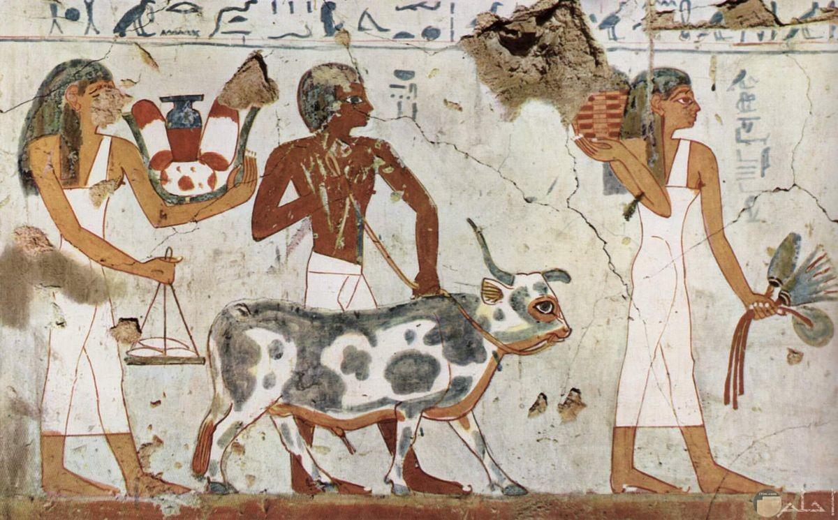 رسمة فرعونية للفلاح الفرعوني القديم مع بقرة و يحرث الأرض.