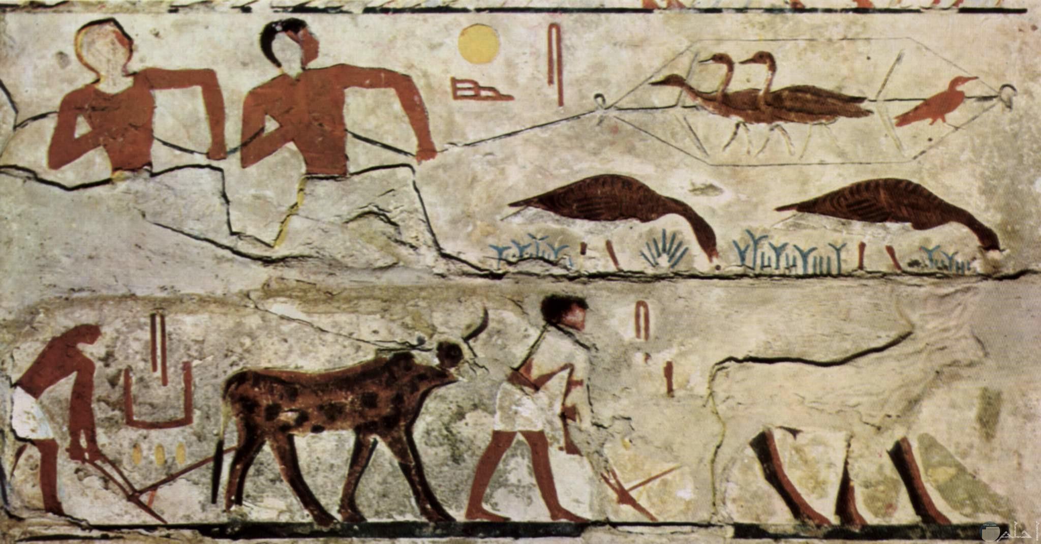 رسمة فرعونية للصيد و أعمال الزراعة في الحقول.