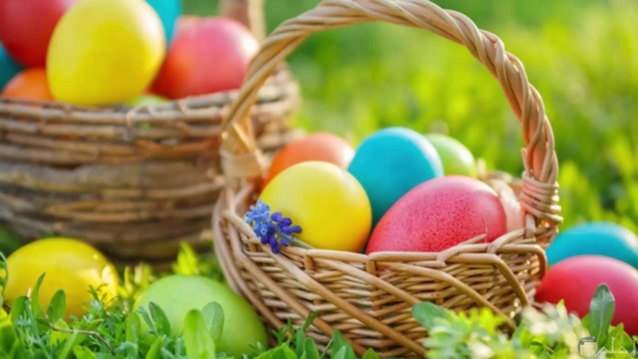 سلة بيض ملون جميلة.