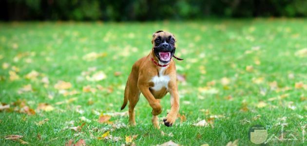 صورة كلب مضحكة