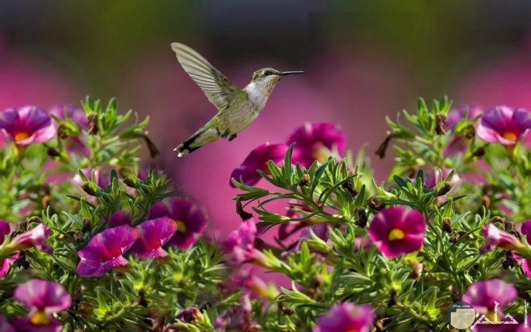 صور طبيعية لعصفور وزهور