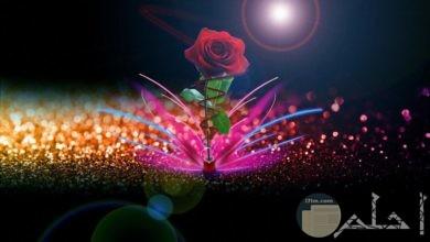 صورة خلفية من الورد الزاهى.