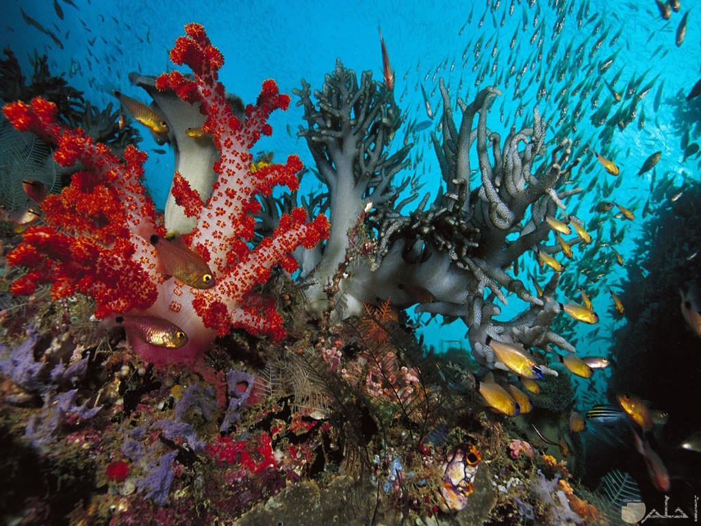 شعب مرجانية واسماك نادرة